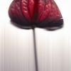 Flower,   Ink Jet Printing on Paper, 190x120cm, 2001